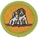 Dog Care 2010 - 13
