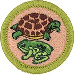 Reptile & Amphibian Study 2014 - Current