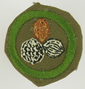 Nut Culture 1942 - 46